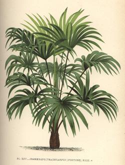 O voir des palmiers en france et ailleurs dans le monde - Image palmier ...